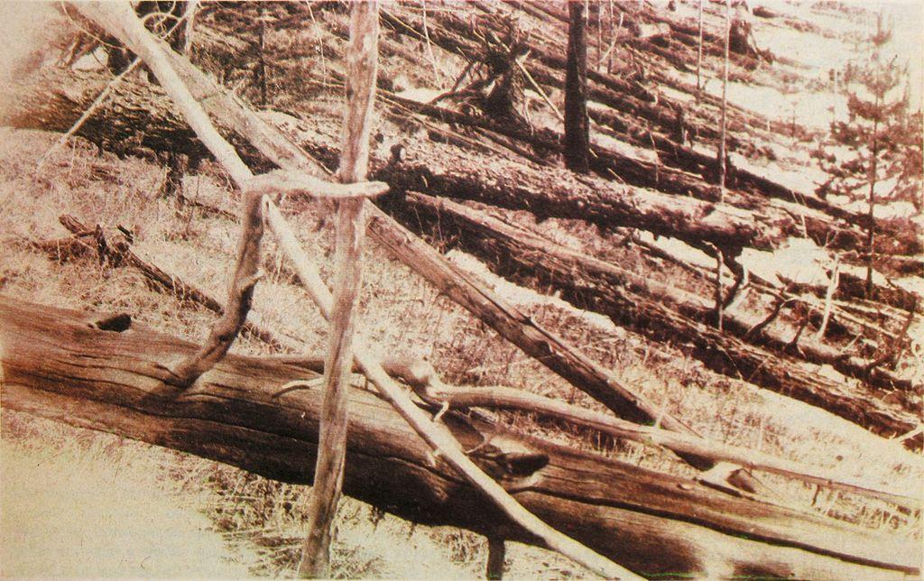 Kuliks 1929 expedition Tunguska_event_fallen_trees near Hushmo river credit wikimedia commons