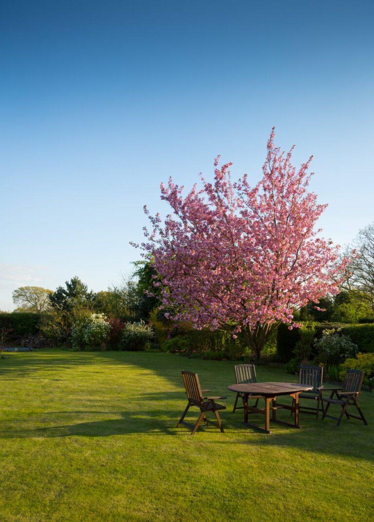 relaxation garden grass spring